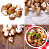 Brown mushroom collage — Stock Photo
