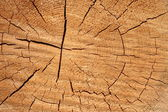 Tree trunk cross as background — Stock Photo