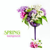 Beautiful spring flowers on a white background — Stock Photo