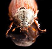 5 月 bug — 图库照片
