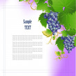 Cluster of grapes — Stock Vector #37541393