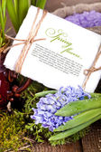 Çiçekler sümbül — Stok fotoğraf