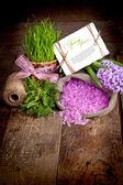 Jacintos de flores — Fotografia Stock