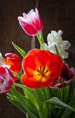 Tulpan blommor — Stockfoto