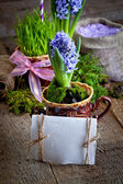 Hyacinths and sea salt — Stock Photo