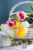 Tulip flowers and quail eggs — 图库照片