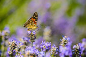 Beautiful butterfly sitting on flowers — Stock Photo