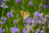 Красивая бабочка на красочные цветы — Стоковое фото