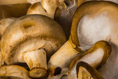 Delicious raw Agraicus mushrooms on wooden background — Stock Photo