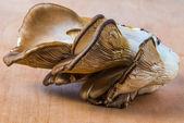 Delicious Pleurotus Agaricales Mushrooms on wooden background — Foto Stock