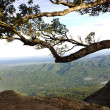 Ancient tree on the top of mountain — Stock Photo #35998269