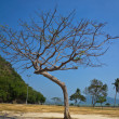 Branch tree standing alone — Stock Photo