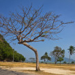 Branch tree standing alone — Stock Photo #36016927