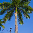 Palm tree on blue background. — Stock Photo #36027987