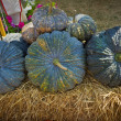 Green pumpkins on the hay. — Stock Photo