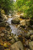 Fish in the creek in the jungle. — Stock Photo