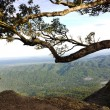 Ancient tree on the top of mountain — Stock Photo #36144431