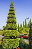 Bel giardino in estate — Foto Stock