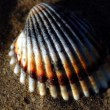Shell over sand — Foto de stock #25647553