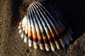 Shell over the sand — Stock Photo