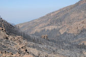 Effects of the Fire in a Forest — Stock Photo