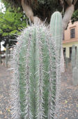 Succulentes plantes vertes — Photo