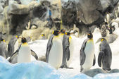 Svart och vit färgad pingvin — Stockfoto