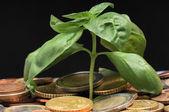 Pièces de monnaie et plante verte — Photo