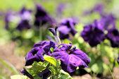 Flores de color — Foto de Stock
