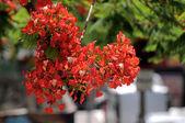 Fleurs colorées — Photo