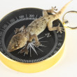 Gecko Lizard and Compass — Stock Photo