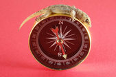 Gecko eidechse und kompass — Stockfoto