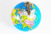 Gecko kertenkele ve küre — Stok fotoğraf