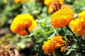 Gekleurde bloemen — Stockfoto