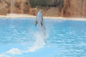 Grey Dolphin on a Very Blue Water — Stock Photo