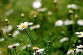 Bílé barevné květy — Stock fotografie
