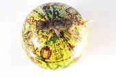 Gecko eidechse und globus — Stockfoto