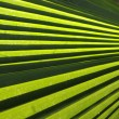 Green Palm Leaves — Stockfoto