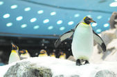 Black and White Colored Penguin — Stockfoto