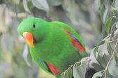One Very Colored Parrot — Stock Photo