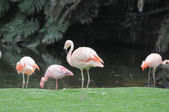 Pink Flamingo Bird on the Floor — Stock Photo