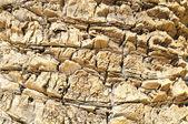 Textured Palm Tree — Foto Stock