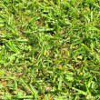 Grass Leaf Texture — Stockfoto #33483201