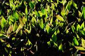 Tekstura trawa — Zdjęcie stockowe