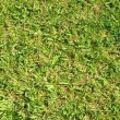 Grass Leaf Texture — Foto de stock #33624501