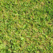 Grass Leaf Texture — Stockfoto #33624501