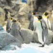 Black and White Colored Penguin — Stock Photo #33737647
