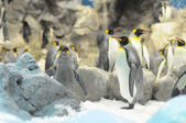 Black and White Colored Penguin — Стоковое фото