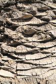 Textured Palm Tree — Stock Photo