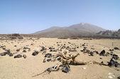 Desierto de arena y rocas — Foto de Stock